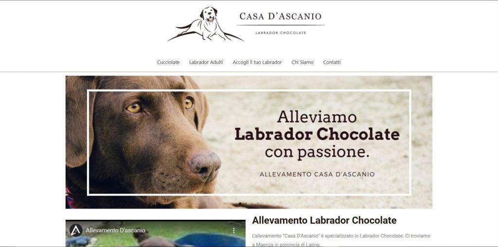 Sito web allevamento labrador cuccioli di labrador
